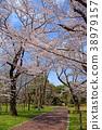 ดอกซากุระบาน,ซากุระบาน,สวน 38979157