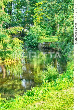 river in the forest 38979522