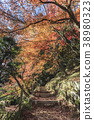 maple leaves in Dazaifu Tenmangu Shrine of fukuoka 38980323