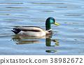 duck 38982672