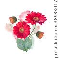 Gerbera Flowers watercolor 38983017