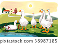 Geese in a meadow near a pond. 38987185