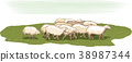 Flock of sheep in a meadow. 38987344