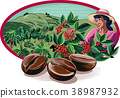 coffee, plantation, beans 38987932