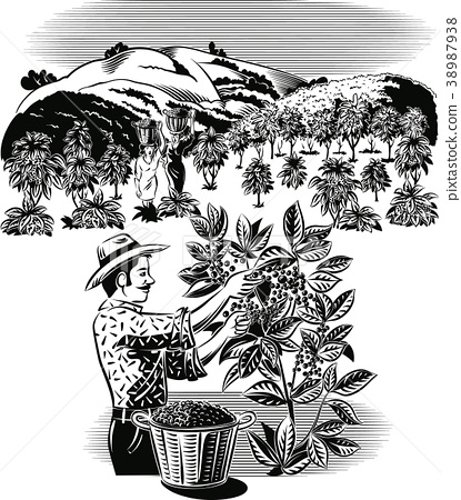 Landscape with coffee wallet on a plantation. 38987938