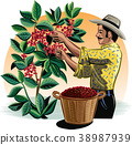 coffee, plantation, farmer 38987939