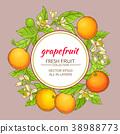 grapefruit vector frame 38988773