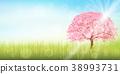 cherry, blossom, tree 38993731