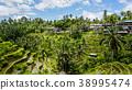 paddy, field, rice 38995474