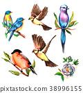 set watercolor bird, vector illustration 38996155