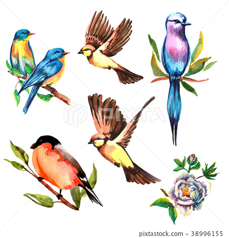 set watercolor bird, vector illustration - Stock