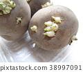 spring, potatoes, potato 38997091