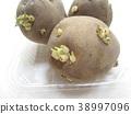 spring, potatoes, potato 38997096