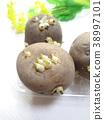 spring, potatoes, potato 38997101