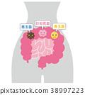小腸 善玉菌 腸內好菌 38997223