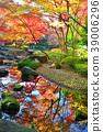 가을, 단풍, 도쿄 39006296