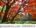 가을, 단풍, 도쿄 39006925