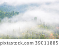 Pine Forest Misty background 39011885