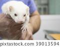 Profile of a ferret 39013594
