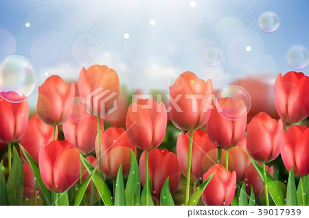 Red tulips flowers in the garden 39017939