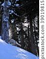 눈, 스노우, 나무 39019815