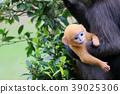 baby, monkey, monkeys 39025306
