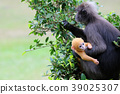 baby, monkey, leaf 39025307