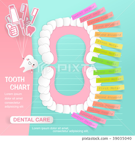 tooth chart with dental care 39035040