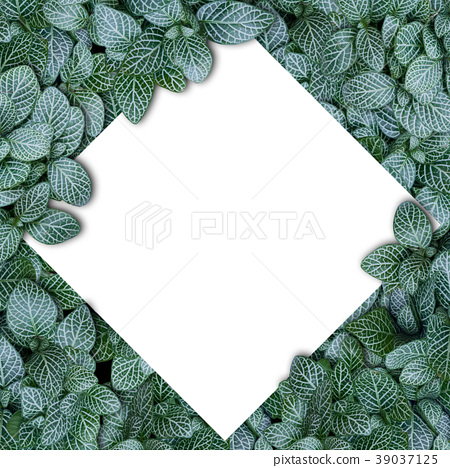 Nature layout made of tropical leaves with paper 39037125