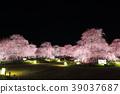 수양 매화의 라이트 업 (스즈카 숲 정원) 39037687