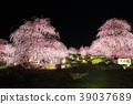 weeping japanese apricot, weeping plum, japanese plum 39037689