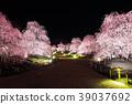 weeping japanese apricot, weeping plum, japanese plum 39037692