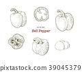 Pepper hand drawn vector set. 39045379