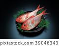 红金眼鲷 红鲷鱼 鱼 39046343