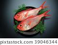 红金眼鲷 红鲷鱼 鱼 39046344