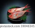 红金眼鲷 红鲷鱼 鱼 39046345