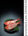 红金眼鲷 红鲷鱼 鱼 39046346