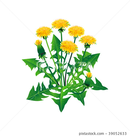 Vector dandelions isolated. Realistic yellow 39052633