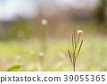 야생초의 빛 1 39055365