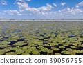 Danube Delta, Romania 39056755
