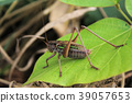 grasshopper, insect, insects 39057653