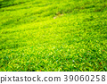 Green plantation of Ceylon tea. 39060258