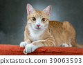 Orange cats sitting on the sofa in the room. 39063593