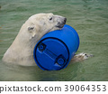 백곰, 흰곰, 북극곰 39064353