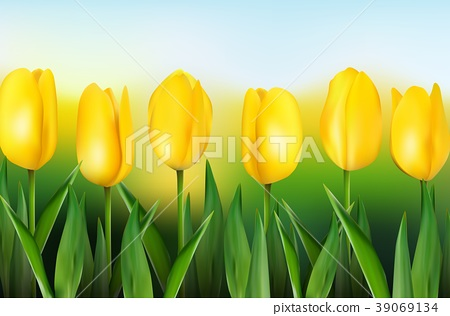 Yellow tulips on background blue sky 39069134