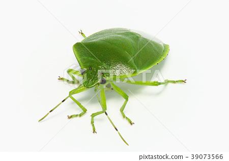 閃亮的綠色小蟲(深度合成) 39073566