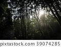 樹林中的陽光 39074285