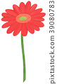 手繪插圖非洲菊紅色 39080783