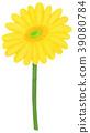 手繪插圖非洲菊黃色 39080784