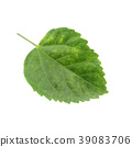 Green leaf of Hibiscus; closeup on white 39083706